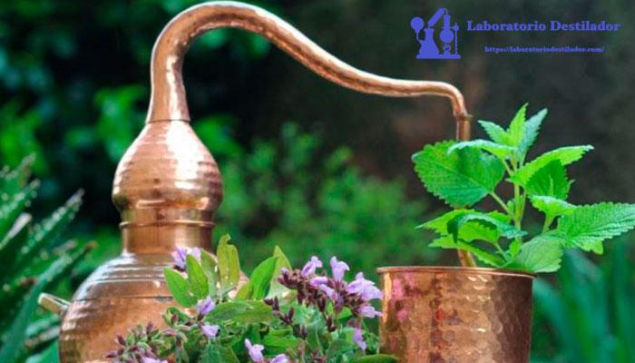destilar-plantas